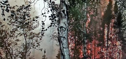 tanana fire